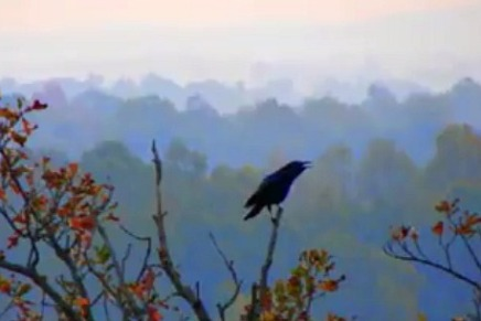 Video Poem: A Thousand Crows