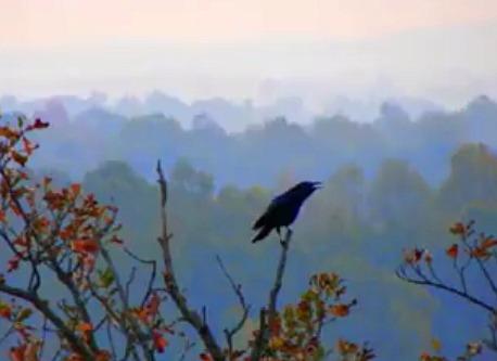 Video Poem: A ThousandCrows