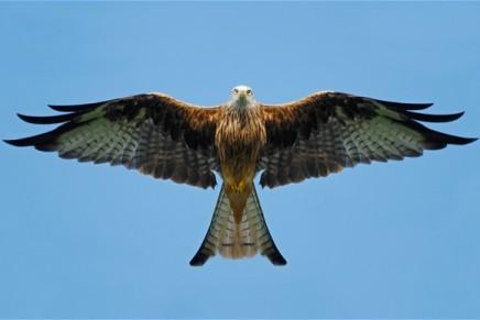 100-word story: Birds