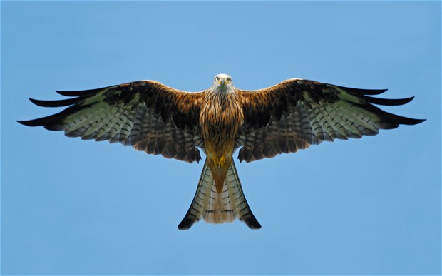 bird-of-prey